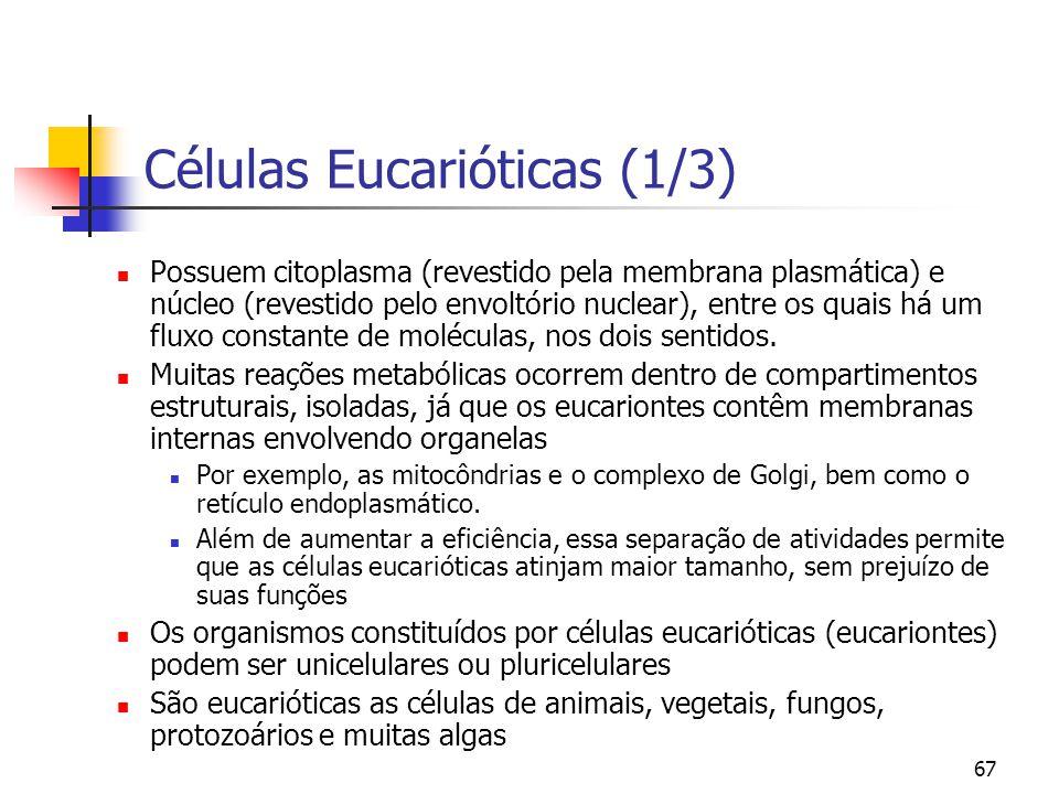 67 Células Eucarióticas (1/3) Possuem citoplasma (revestido pela membrana plasmática) e núcleo (revestido pelo envoltório nuclear), entre os quais há