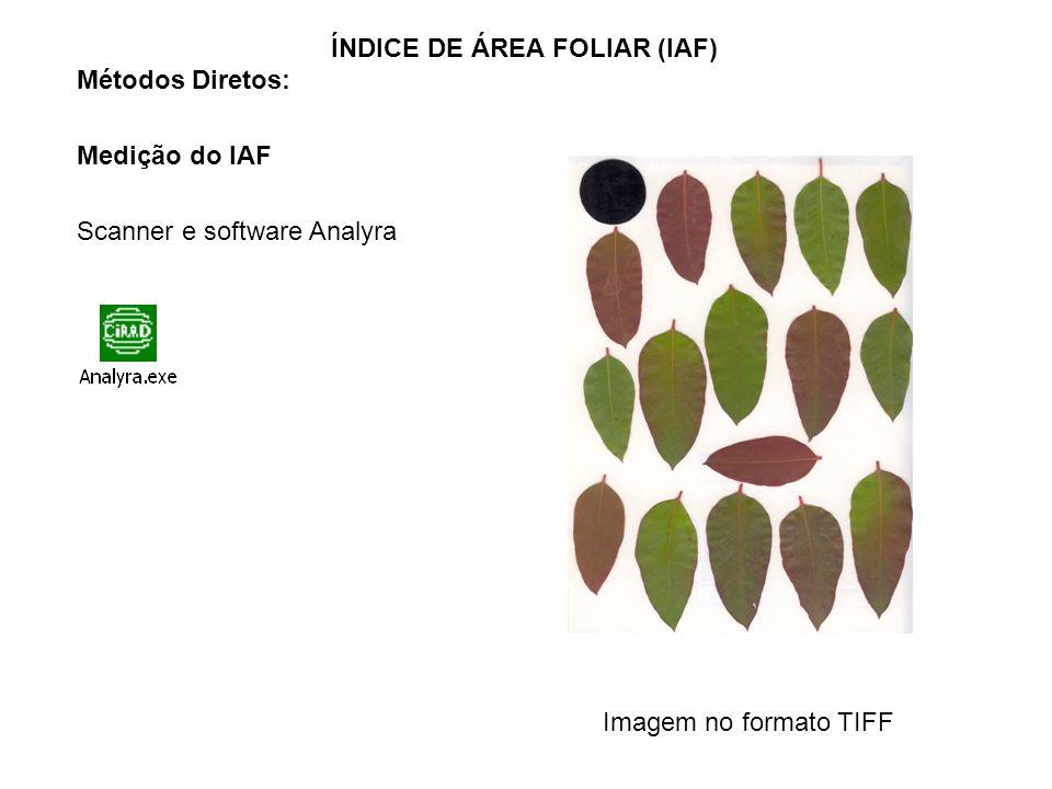 Métodos Diretos: Medição do IAF Scanner e software Analyra ÍNDICE DE ÁREA FOLIAR (IAF) Imagem no formato TIFF