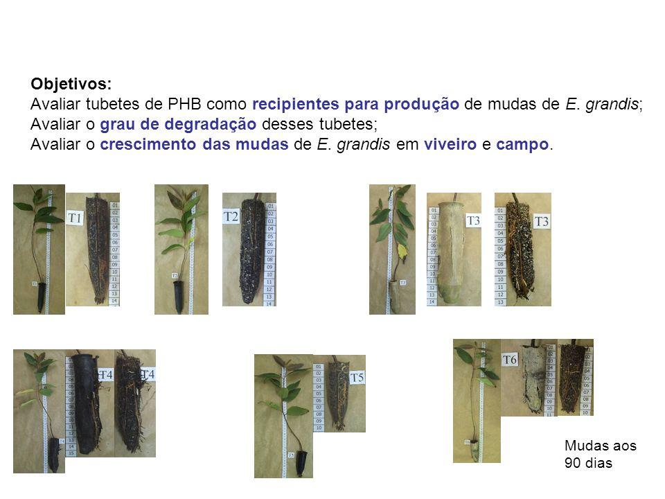 Objetivos: Avaliar tubetes de PHB como recipientes para produção de mudas de E.