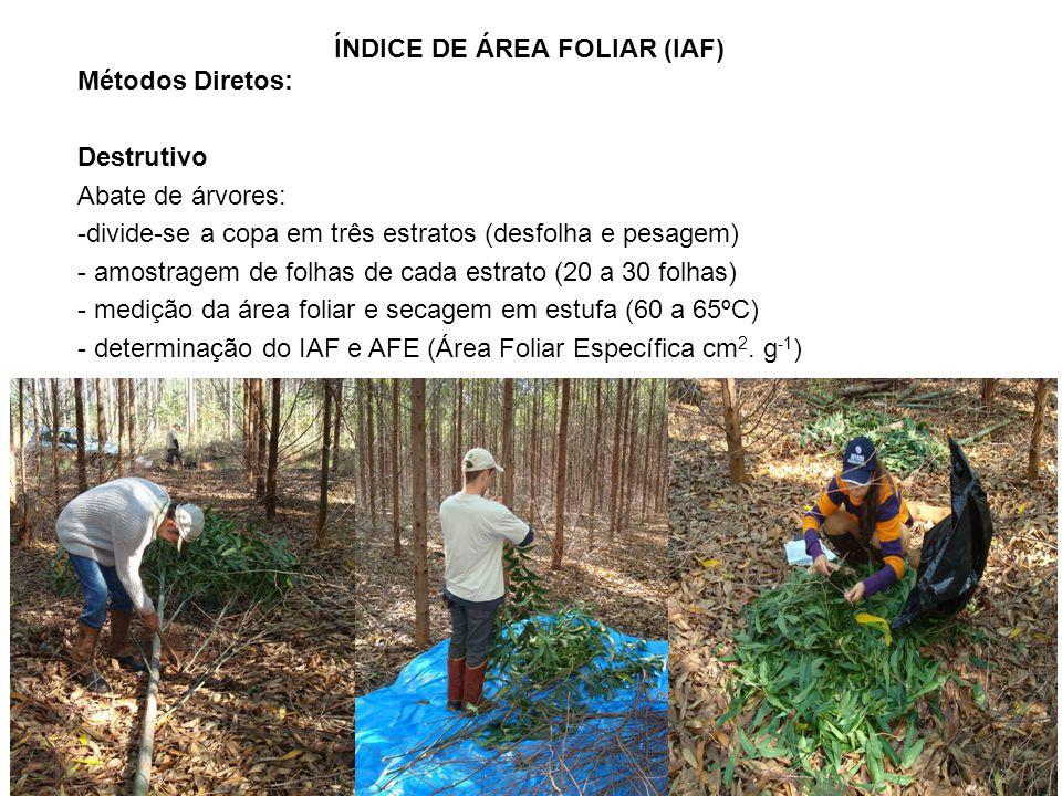 Métodos Diretos: Destrutivo Abate de árvores: -divide-se a copa em três estratos (desfolha e pesagem) - amostragem de folhas de cada estrato (20 a 30 folhas) - medição da área foliar e secagem em estufa (60 a 65ºC) - determinação do IAF e AFE (Área Foliar Específica cm 2.