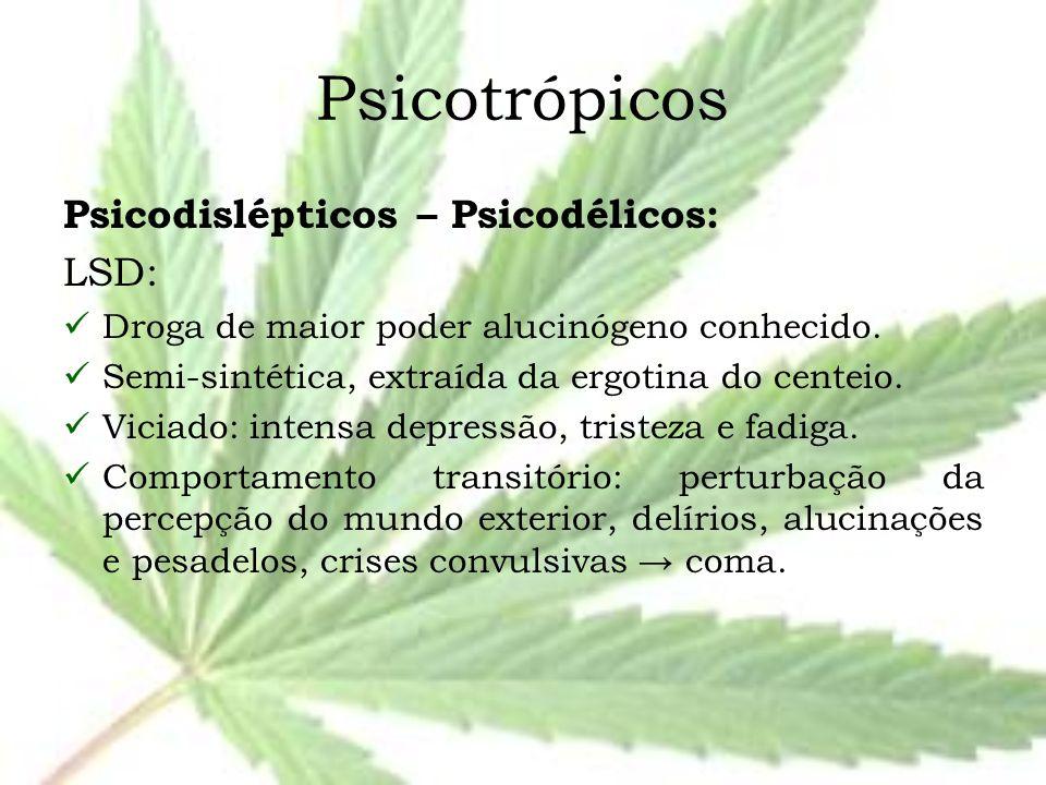 Psicotrópicos Psicodislépticos – Psicodélicos: LSD: Droga de maior poder alucinógeno conhecido. Semi-sintética, extraída da ergotina do centeio. Vicia