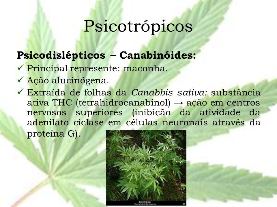 Psicotrópicos Psicodislépticos – Canabinóides: Principal represente: maconha. Ação alucinógena. Extraída de folhas da Canabbis sativa: substância ativ
