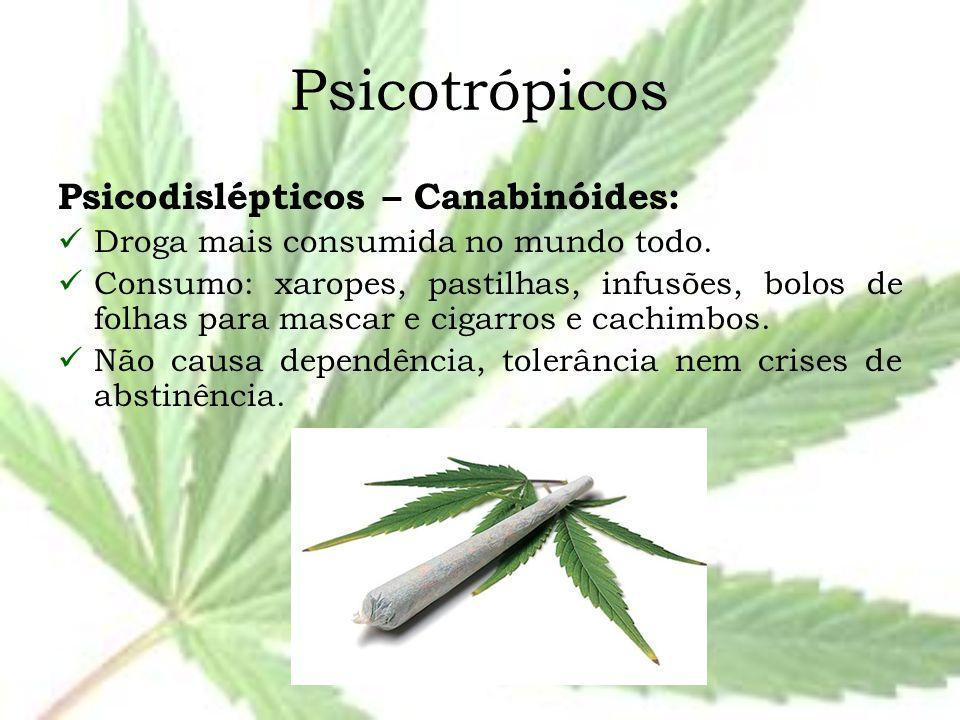 Psicotrópicos Psicodislépticos – Canabinóides: Droga mais consumida no mundo todo. Consumo: xaropes, pastilhas, infusões, bolos de folhas para mascar