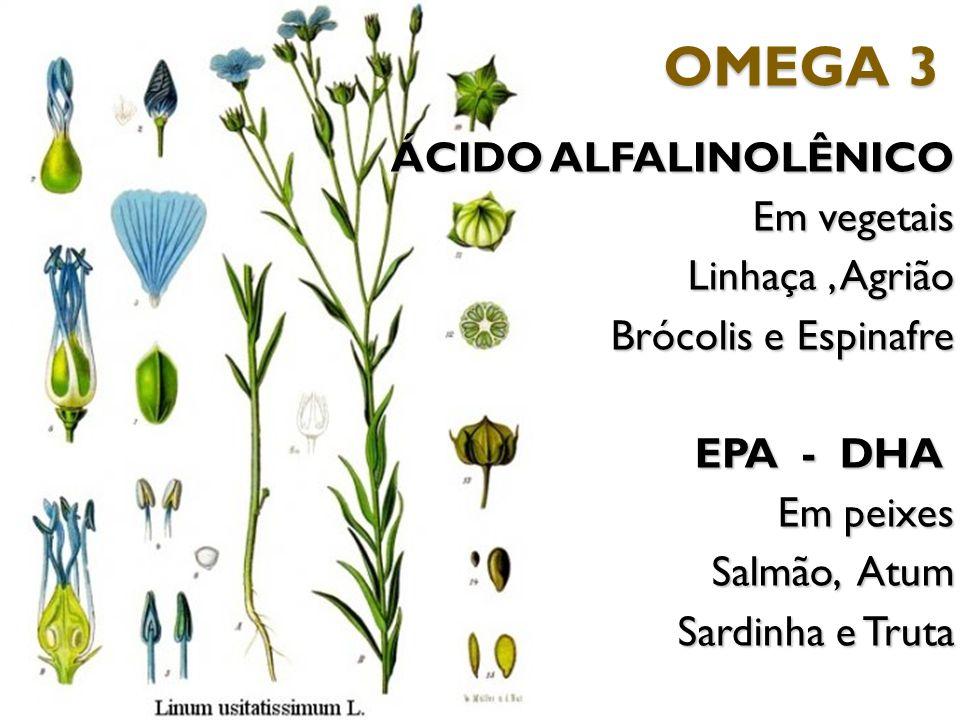 ÁCIDO ALFALINOLÊNICO Em vegetais Linhaça, Agrião Linhaça, Agrião Brócolis e Espinafre EPA - DHA EPA - DHA Em peixes Salmão, Atum Sardinha e Truta OMEG