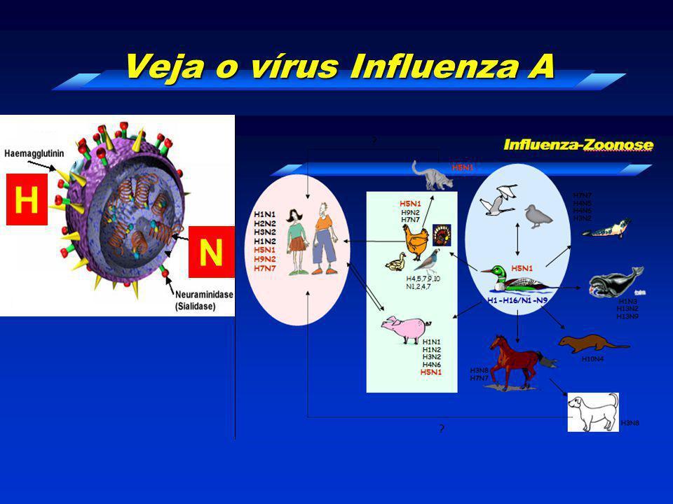 Veja o vírus Influenza A H N