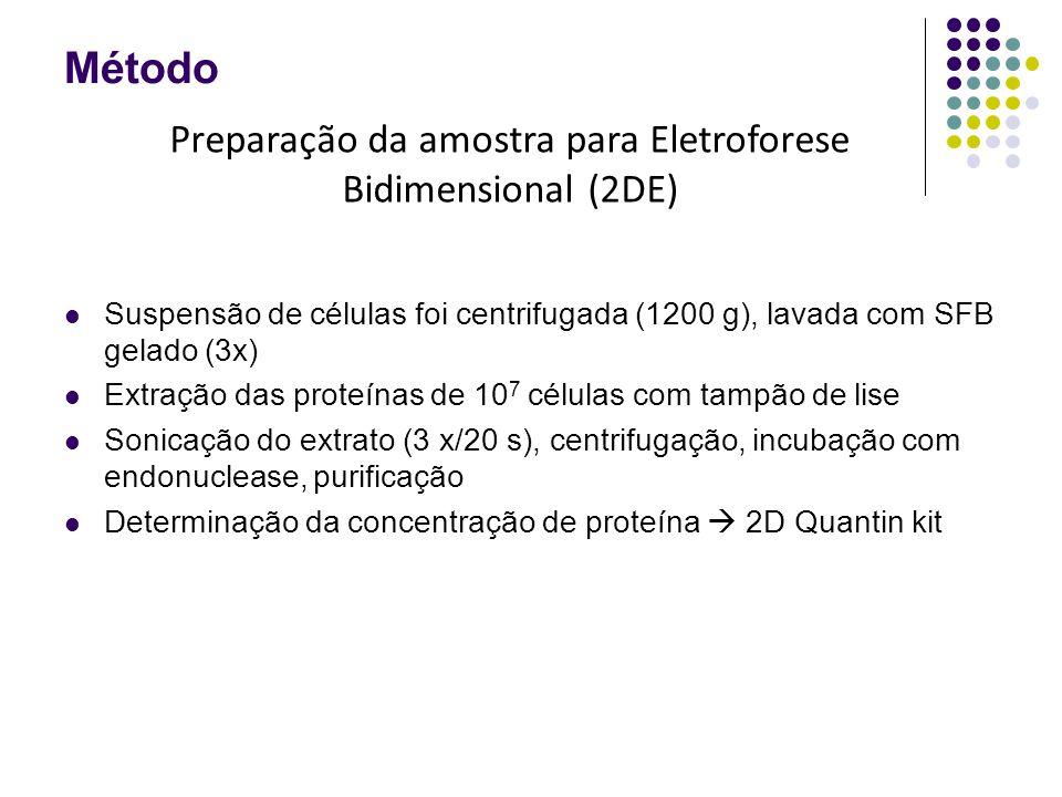 Método Suspensão de células foi centrifugada (1200 g), lavada com SFB gelado (3x) Extração das proteínas de 10 7 células com tampão de lise Sonicação do extrato (3 x/20 s), centrifugação, incubação com endonuclease, purificação Determinação da concentração de proteína  2D Quantin kit Preparação da amostra para Eletroforese Bidimensional (2DE)