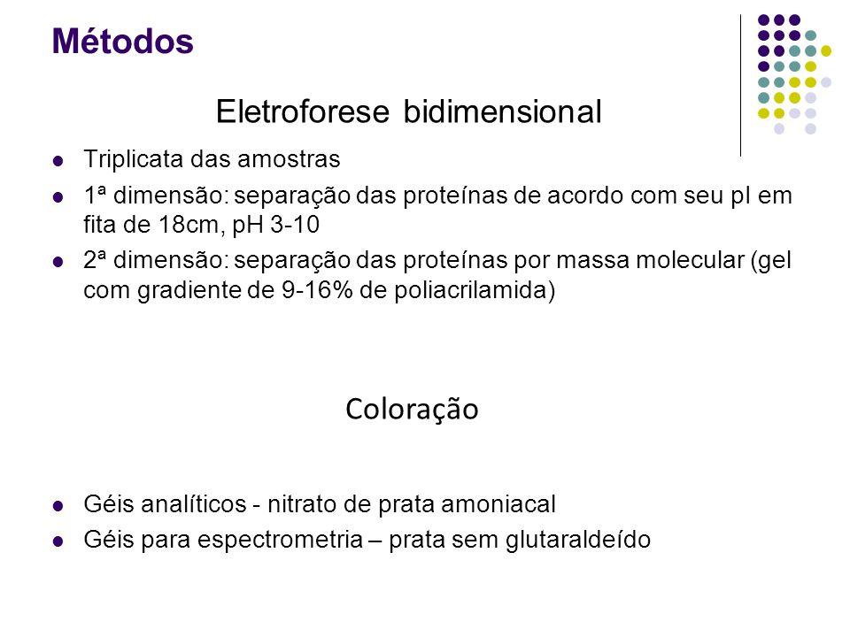 Métodos Triplicata das amostras 1ª dimensão: separação das proteínas de acordo com seu pI em fita de 18cm, pH 3-10 2ª dimensão: separação das proteínas por massa molecular (gel com gradiente de 9-16% de poliacrilamida) Géis analíticos - nitrato de prata amoniacal Géis para espectrometria – prata sem glutaraldeído Eletroforese bidimensional Coloração