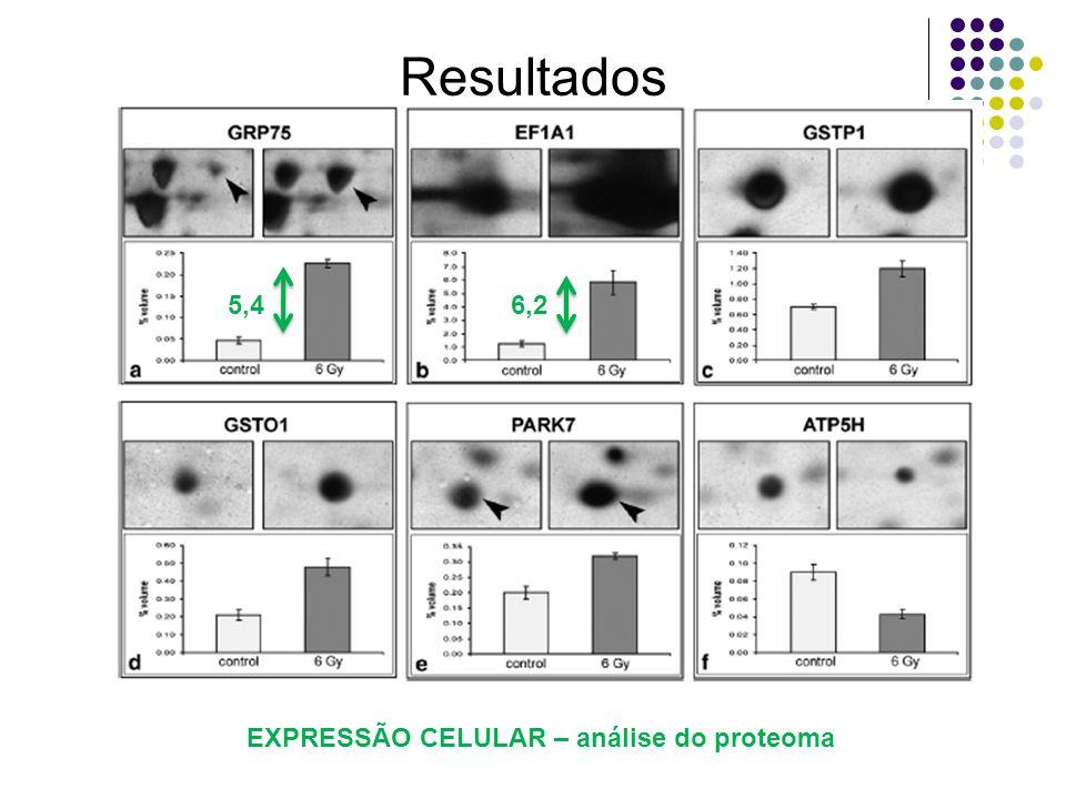 Resultados 5,46,2 EXPRESSÃO CELULAR – análise do proteoma
