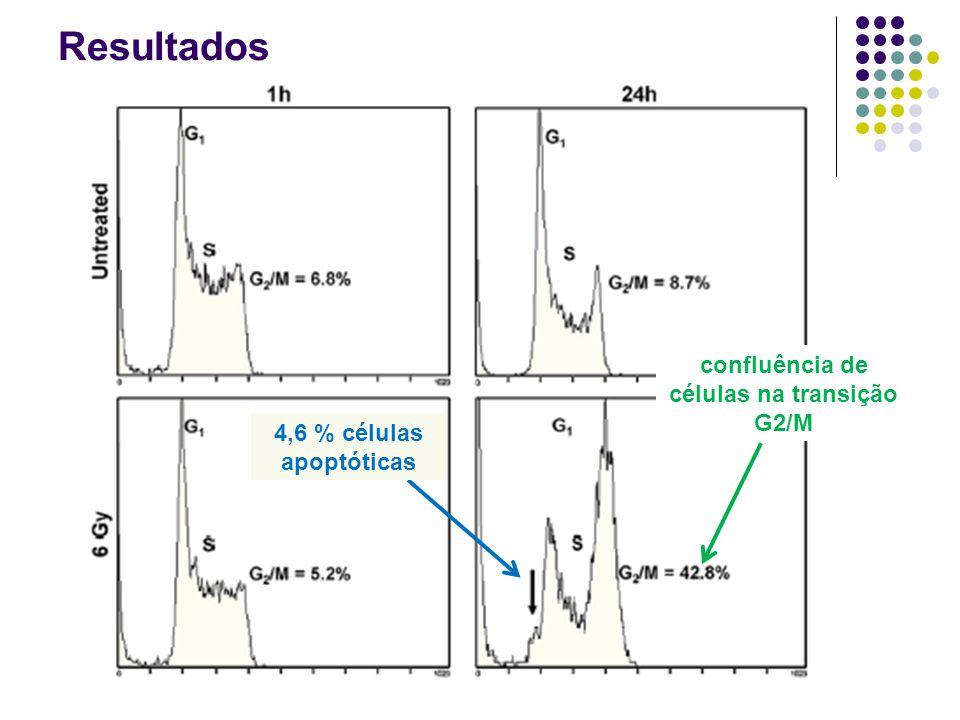 Resultados confluência de células na transição G2/M 4,6 % células apoptóticas