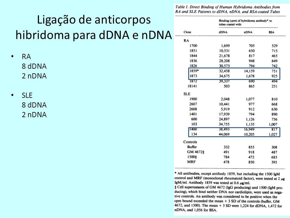 Ligação de anticorpos hibridoma para dDNA e nDNA RA 8 dDNA 2 nDNA SLE 8 dDNA 2 nDNA