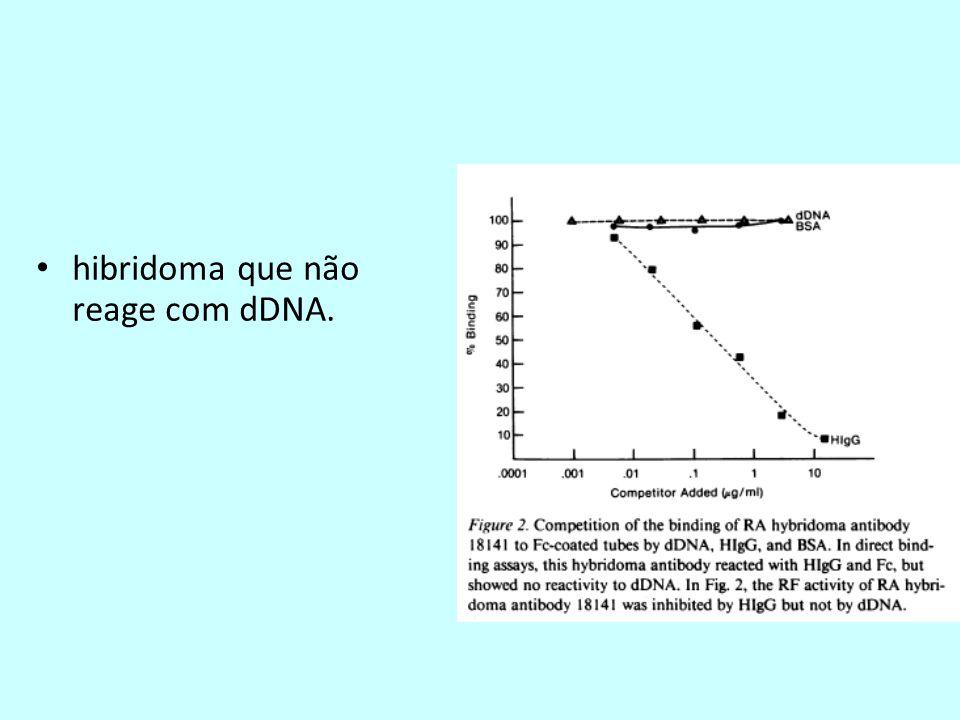 hibridoma que não reage com dDNA.