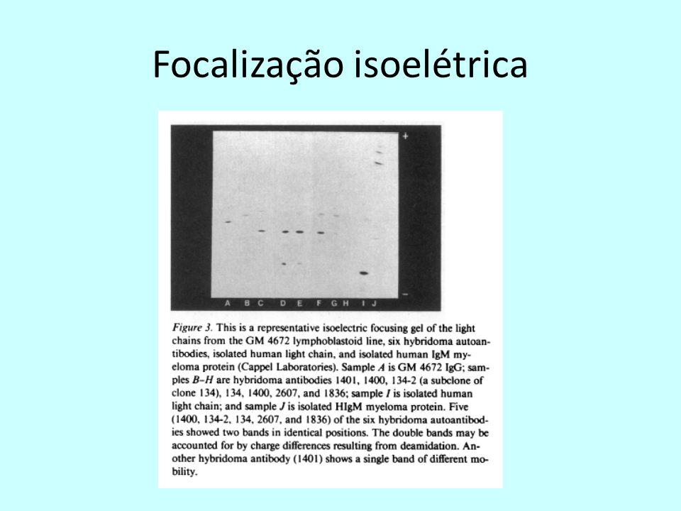 Focalização isoelétrica