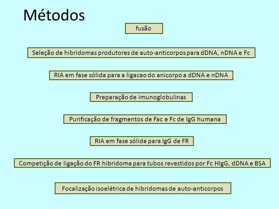 Métodos fusão Seleção de hibridomas produtores de auto-anticorpos para dDNA, nDNA e Fc RIA em fase sólida para a ligacao do anicorpo a dDNA e nDNA Competição de ligação do FR hibridoma para tubos revestidos por Fc HIgG, dDNA e BSA Preparação de imunoglobulinas Purificação de fragmentos de Fac e Fc de IgG humana RIA em fase sólida para IgG de FR Focalização isoelétrica de hibridomas de auto-anticorpos