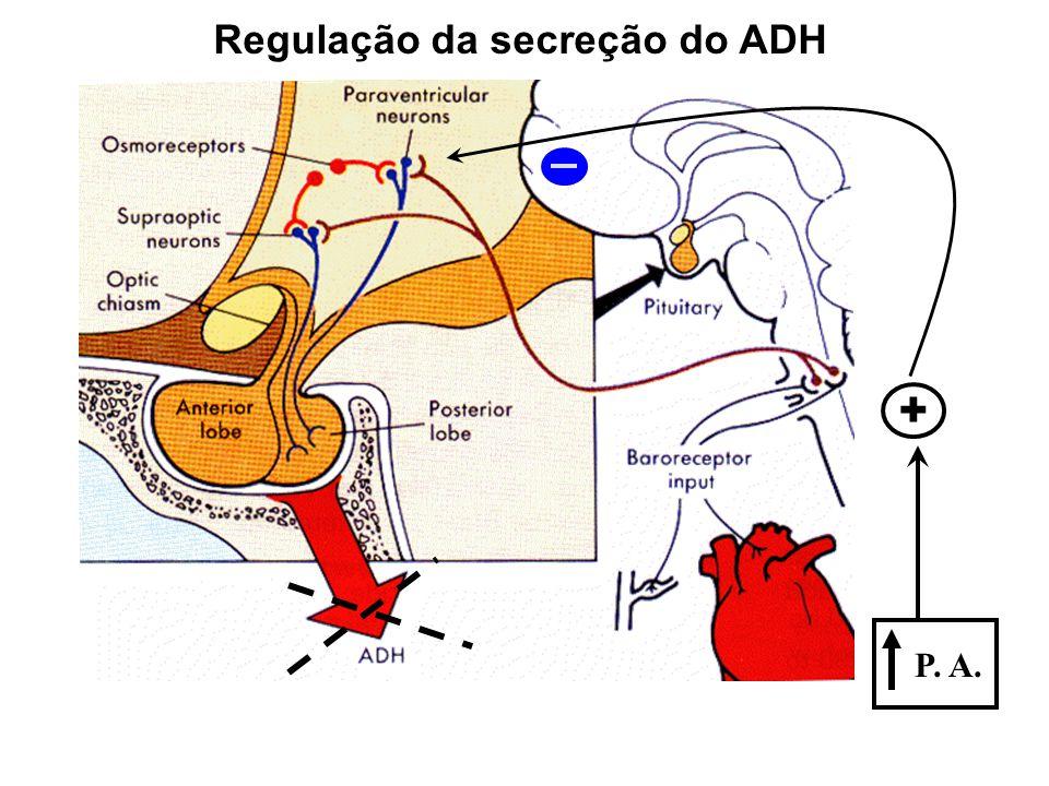 Regulação da secreção do ADH P. A. +