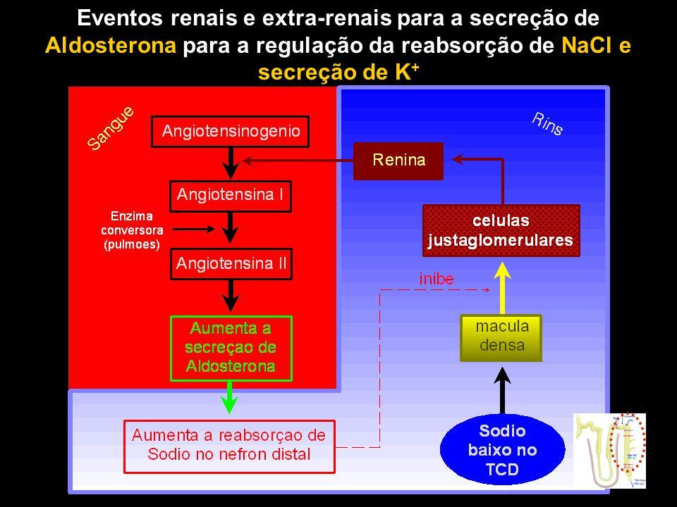 Eventos renais e extra-renais para a secreção de Aldosterona para a regulação da reabsorção de NaCl e secreção de K +