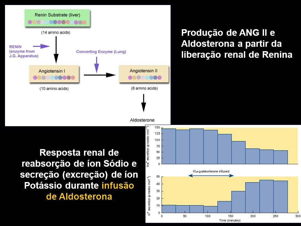 Resposta renal de reabsorção de íon Sódio e secreção (excreção) de íon Potássio durante infusão de Aldosterona Produção de ANG II e Aldosterona a part
