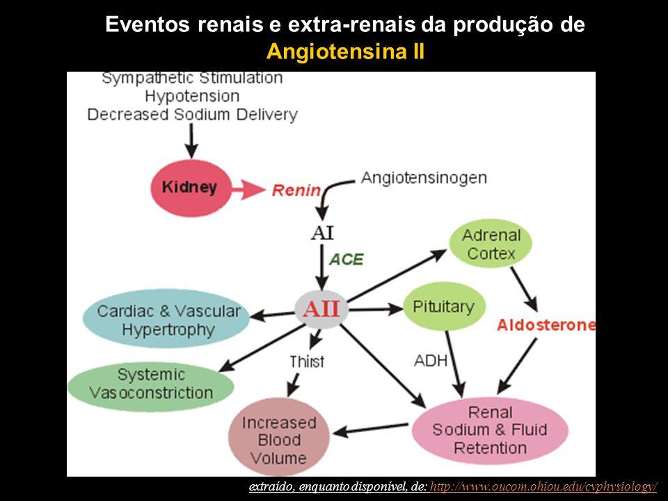 Eventos renais e extra-renais da produção de Angiotensina II extraído, enquanto disponível, de: http://www.oucom.ohiou.edu/cvphysiology/http://www.oucom.ohiou.edu/cvphysiology/