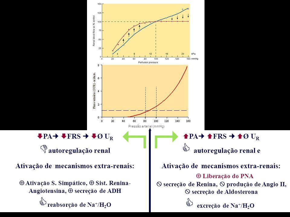  PA  FRS  Ø U R  autoregulação renal Ativação de mecanismos extra-renais:  Ativação S. Simpático,  Sist. Renina- Angiotensina,  secreção de ADH