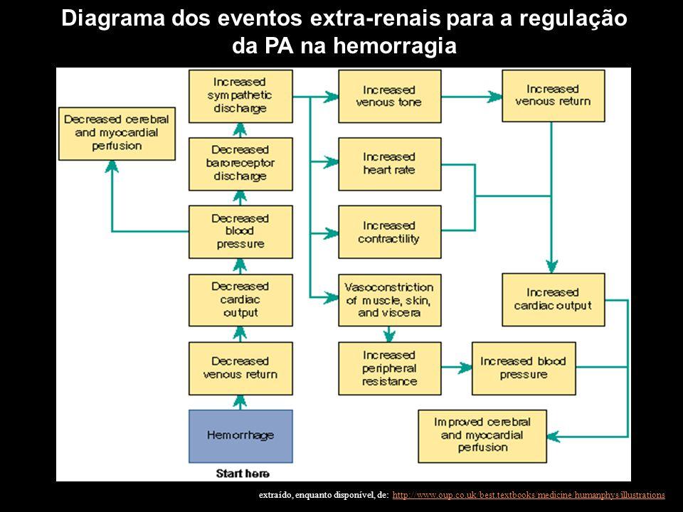 Diagrama dos eventos extra-renais para a regulação da PA na hemorragia extraído, enquanto disponível, de: http://www.oup.co.uk/best.textbooks/medicine
