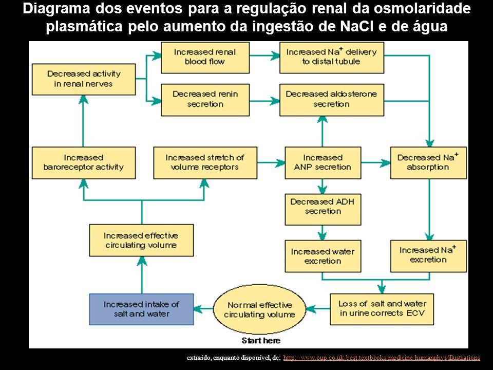 Diagrama dos eventos para a regulação renal da osmolaridade plasmática pelo aumento da ingestão de NaCl e de água extraído, enquanto disponível, de: h