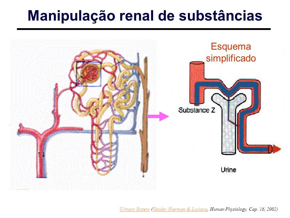 http://www.sci.sdsu.edu/Faculty/Paul.Paolini/ppp/lecture23/sld009.htm Esquema simplificado Manipulação renal de substâncias Urinary SystemUrinary System (Vander, Sherman & Luciano, Human Physiology, Cap.