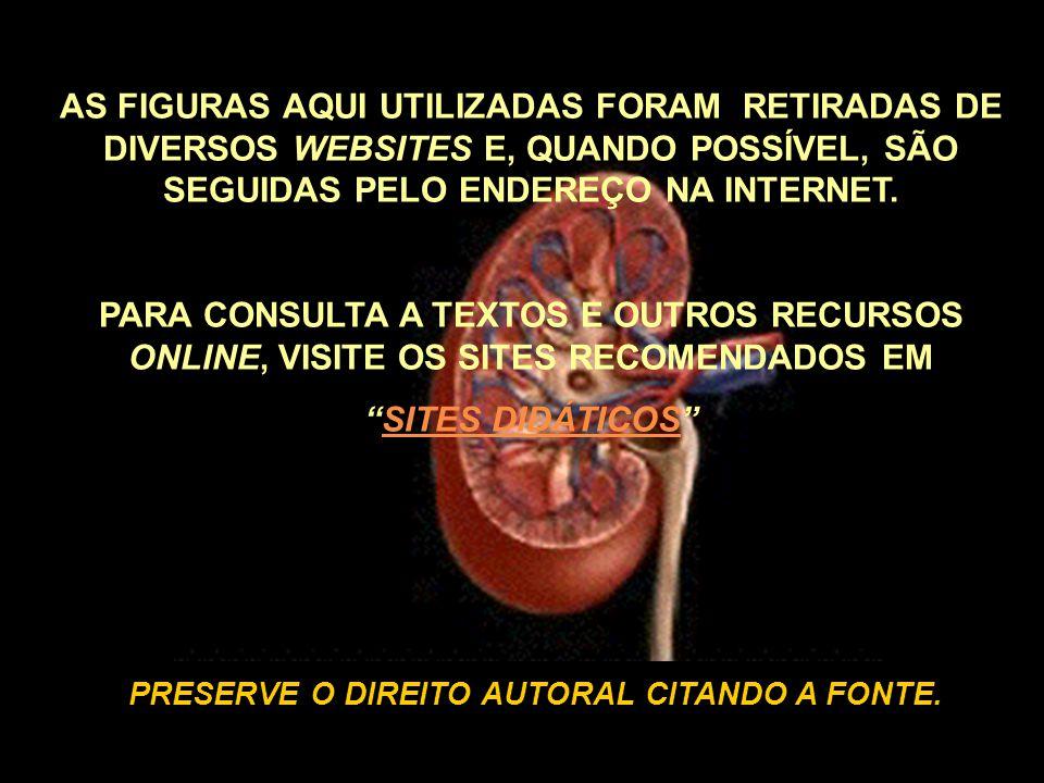 AS FIGURAS AQUI UTILIZADAS FORAM RETIRADAS DE DIVERSOS WEBSITES E, QUANDO POSSÍVEL, SÃO SEGUIDAS PELO ENDEREÇO NA INTERNET.