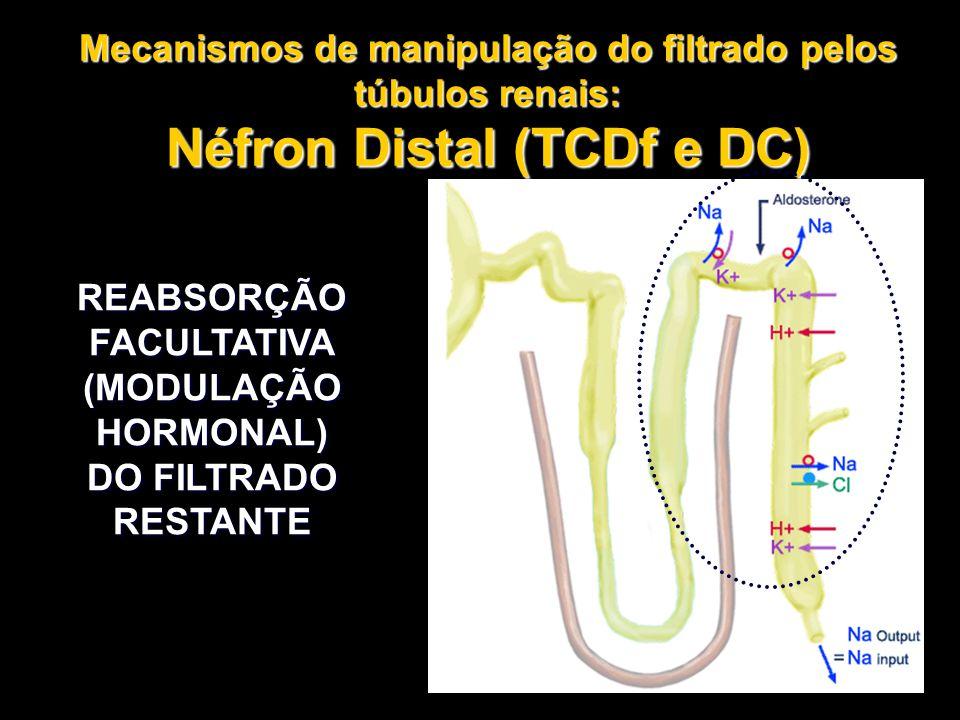 REABSORÇÃO FACULTATIVA (MODULAÇÃO HORMONAL) DO FILTRADO RESTANTE Mecanismos de manipulação do filtrado pelos túbulos renais: Néfron Distal (TCDf e DC)