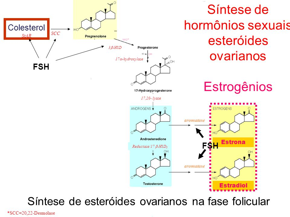 Colesterol StAR 17  -hydroxylase 17,20- lyase aromatase *SCC=20,22-Desmolase SCC 3  -HSD Reductase/17  -HSD 3 aromatase Síntese de hormônios sexuais esteróides ovarianos Progesterona e Estrogênios Colesterol Estrona Estradiol FSH Síntese de esteróides ovarianos na fase folicular