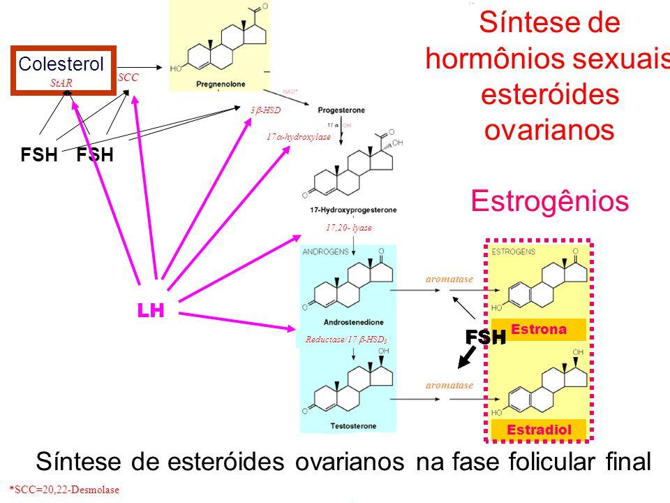 Colesterol StAR 17  -hydroxylase 17,20- lyase aromatase *SCC=20,22-Desmolase SCC 3  -HSD Reductase/17  -HSD 3 aromatase Síntese de hormônios sexuais esteróides ovarianos Progesterona e Estrogênios Colesterol Estrona Estradiol FSH Síntese de esteróides ovarianos na fase folicular final FSH LH