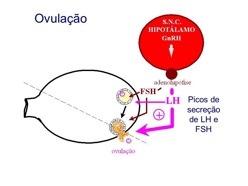 Ovulação Picos de secreção de LH e FSH