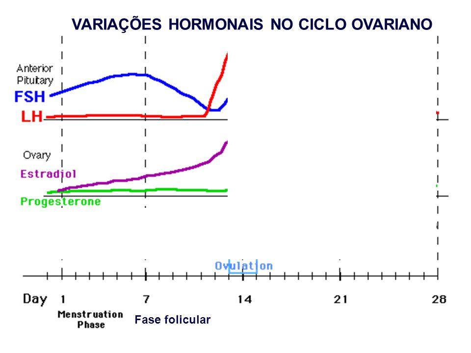 Fase folicular VARIAÇÕES HORMONAIS NO CICLO OVARIANO