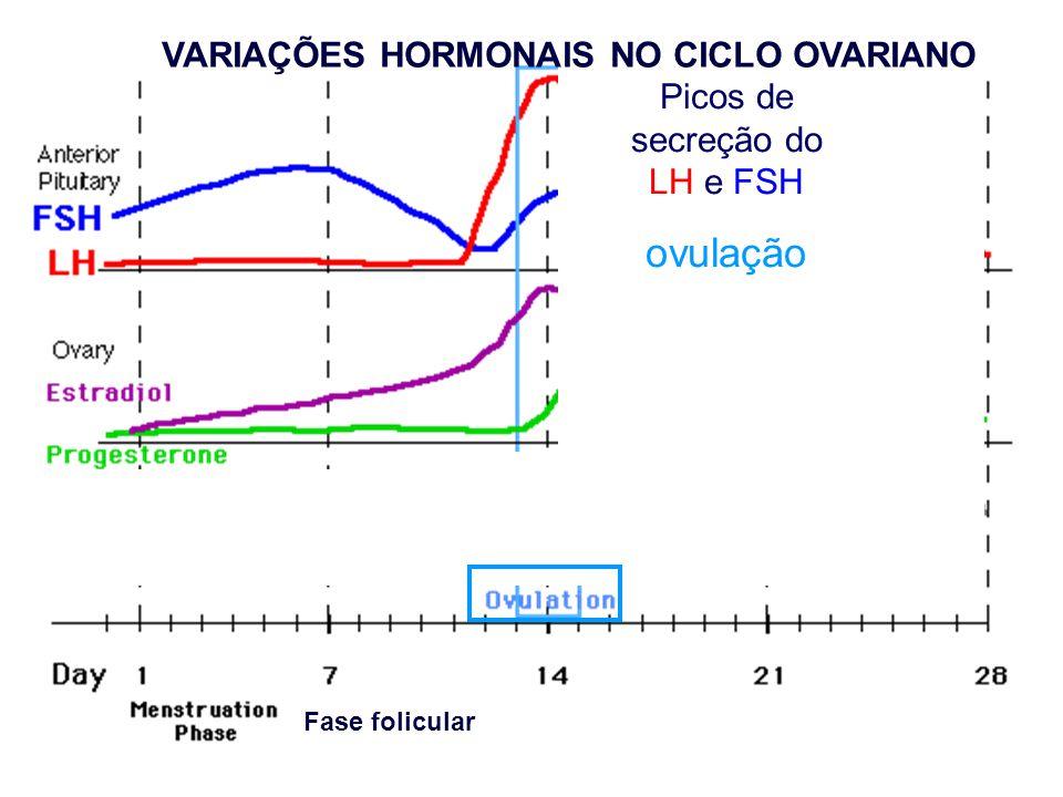 Picos de secreção do LH e FSH ovulação Fase folicular VARIAÇÕES HORMONAIS NO CICLO OVARIANO