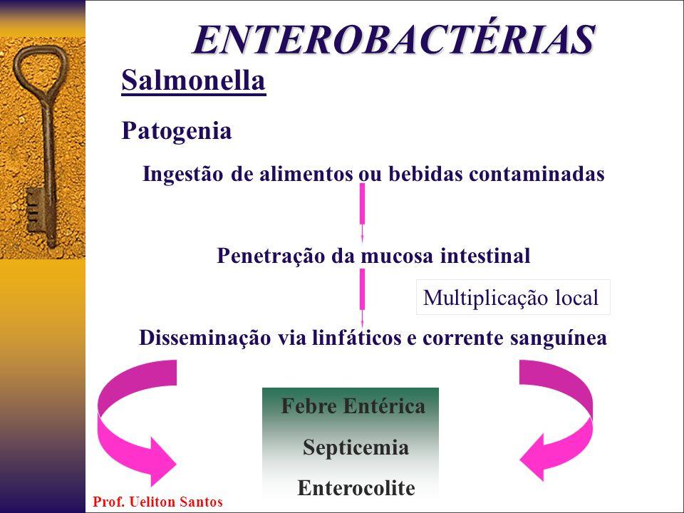 ENTEROBACTÉRIAS Salmonella Patogenia Ingestão de alimentos ou bebidas contaminadas Penetração da mucosa intestinal Disseminação via linfáticos e corre