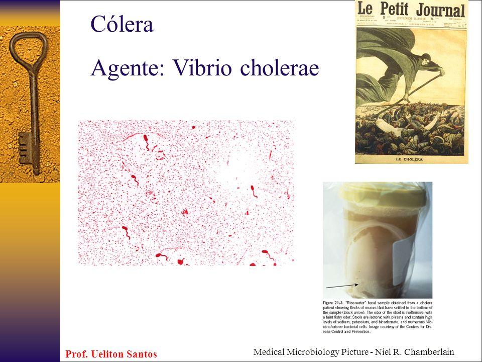 Medical Microbiology Picture - Niel R. Chamberlain Cólera Agente: Vibrio cholerae Prof. Ueliton Santos