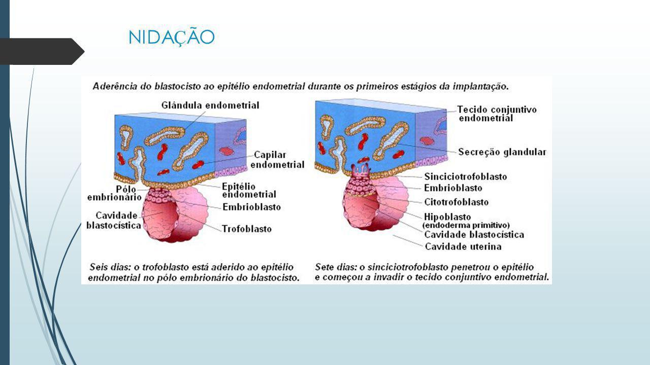 CICLO MENSTRUAL  Ex.: Uma mulher com ciclo regular de 28 dias, menstruou no dia 22 de setembro. Qual a data prov á vel da pr ó xima ovula ç ão e do p