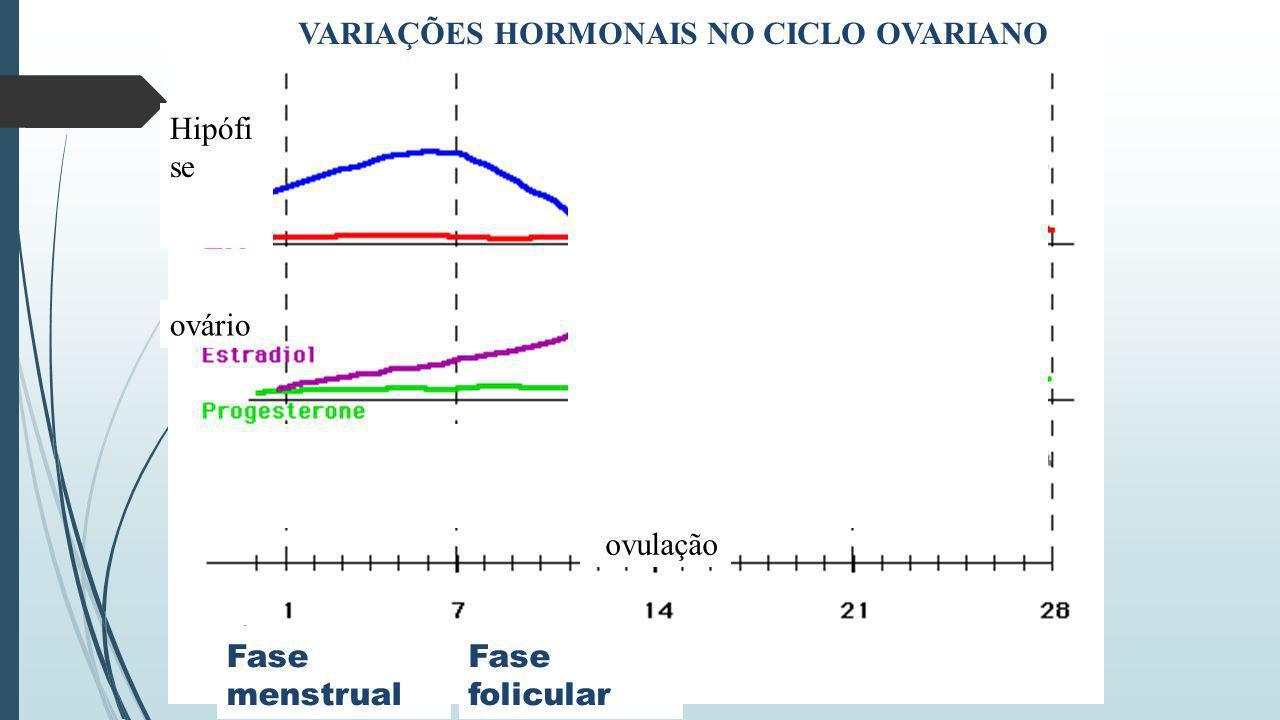 VARIAÇÕES HORMONAIS NO CICLO OVARIANO Hipófi se ovário Fase menstrual ovulação