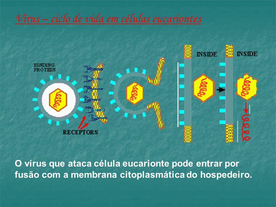 Vírus – ciclo de vida em células eucariontes O vírus que ataca célula eucarionte pode entrar por fusão com a membrana citoplasmática do hospedeiro.