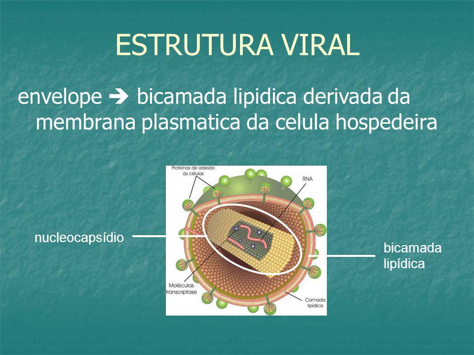 ESTRUTURA VIRAL envelope  bicamada lipidica derivada da membrana plasmatica da celula hospedeira nucleocapsídio bicamada lipídica