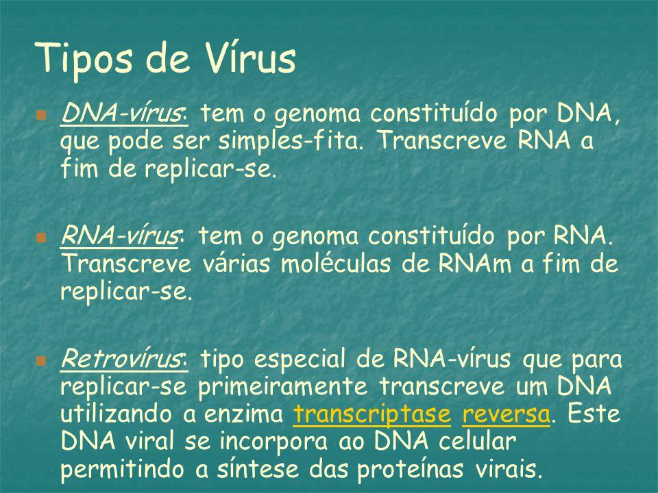 Tipos de V í rus DNA-v í rus: tem o genoma constitu í do por DNA, que pode ser simples-fita.