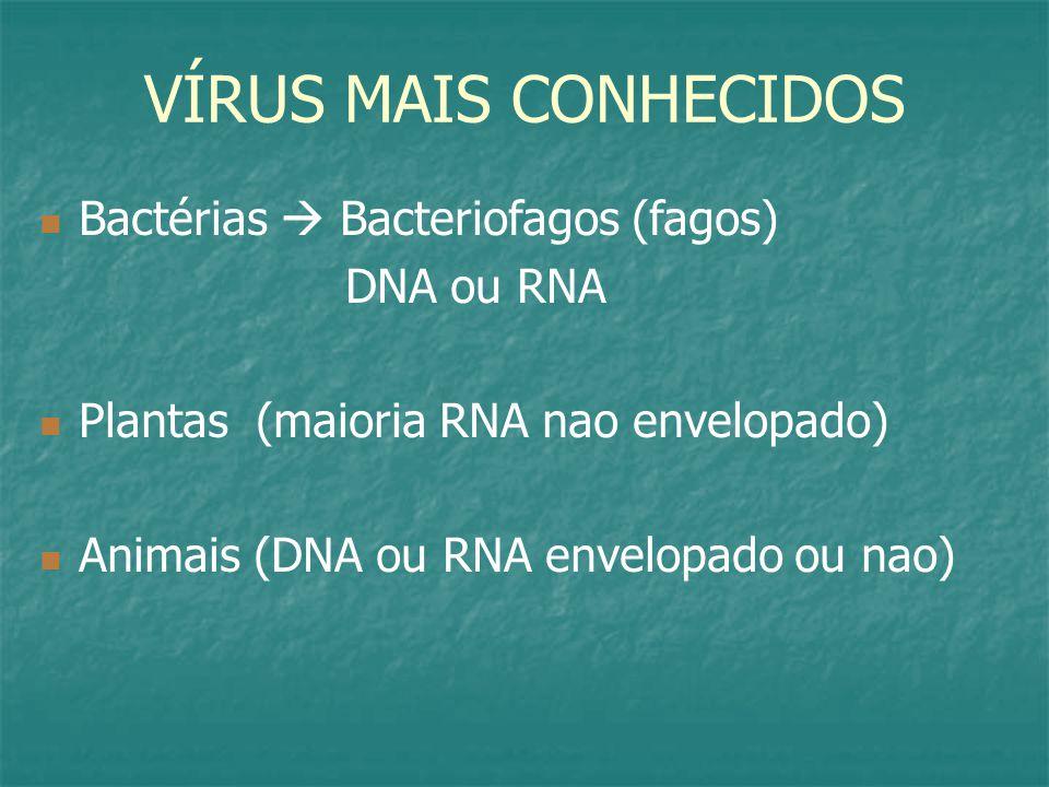 VÍRUS MAIS CONHECIDOS Bactérias  Bacteriofagos (fagos) DNA ou RNA Plantas (maioria RNA nao envelopado) Animais (DNA ou RNA envelopado ou nao)