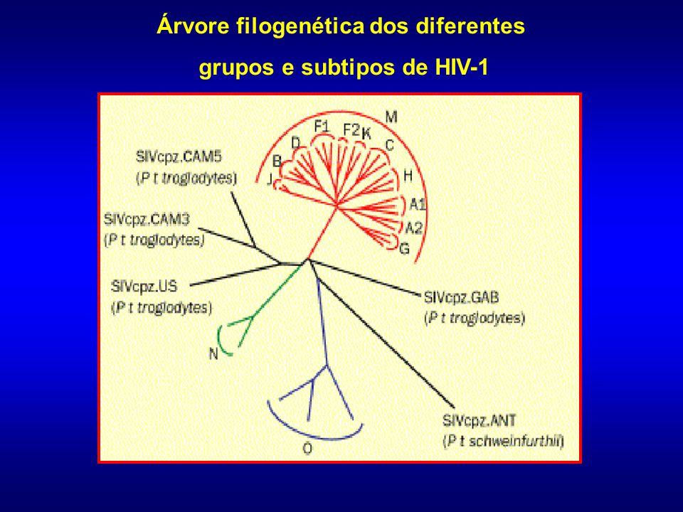 CLASSIFICAÇÃO DO HIV HIV-1HIV-1 - Pandemia Mundial -3 grupos: HIV-2HIV-2 - Oda África - Oeste da África -Homologia de 80% com SIV sooty mangabey -Homologia entre 40-60% com HIV-1 - 8 subtipos: A, B e (C, D, E, F, G, H) Grupo M 9 Subtipos: A-D, F-H, J e K A-D, F-H, J e K - 32 CRF - 32 CRF - Várias URF - Várias URF Grupo O Guiné Equatorial, Camarões e Gabão Grupo N Camarões