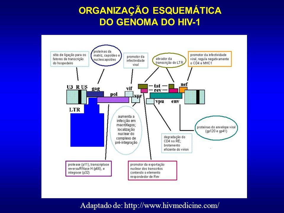 ESTRUTURA ESQUEMÁTICA DO HIV-1 Fonte: http://www.vircolab.com Família RETROVIRIDAE RETROVIRIDAE Subfamília LENTiVIRINAE Gênero LENTIVIRUS LENTIVIRUS