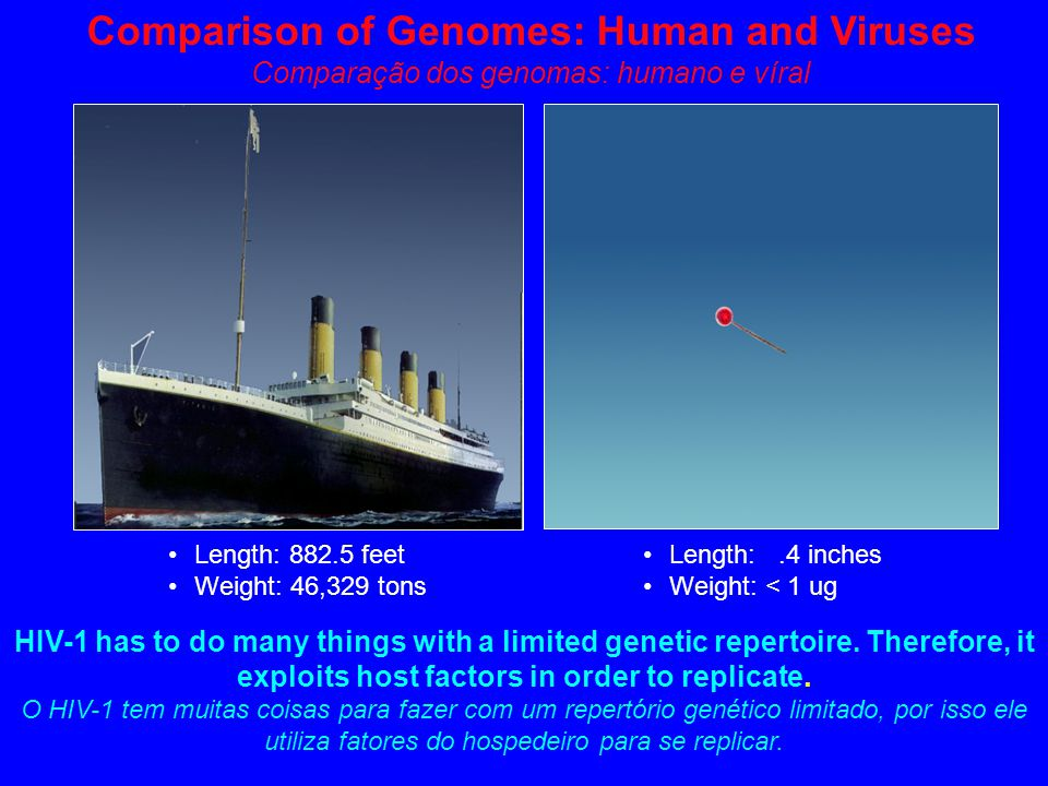 Length: 882.5 feet Weight: 46,329 tons Length:.4 inches Weight: < 1 ug Comparison of Genomes: Human and Viruses Comparação dos genomas: humano e víral HIV-1 has to do many things with a limited genetic repertoire.