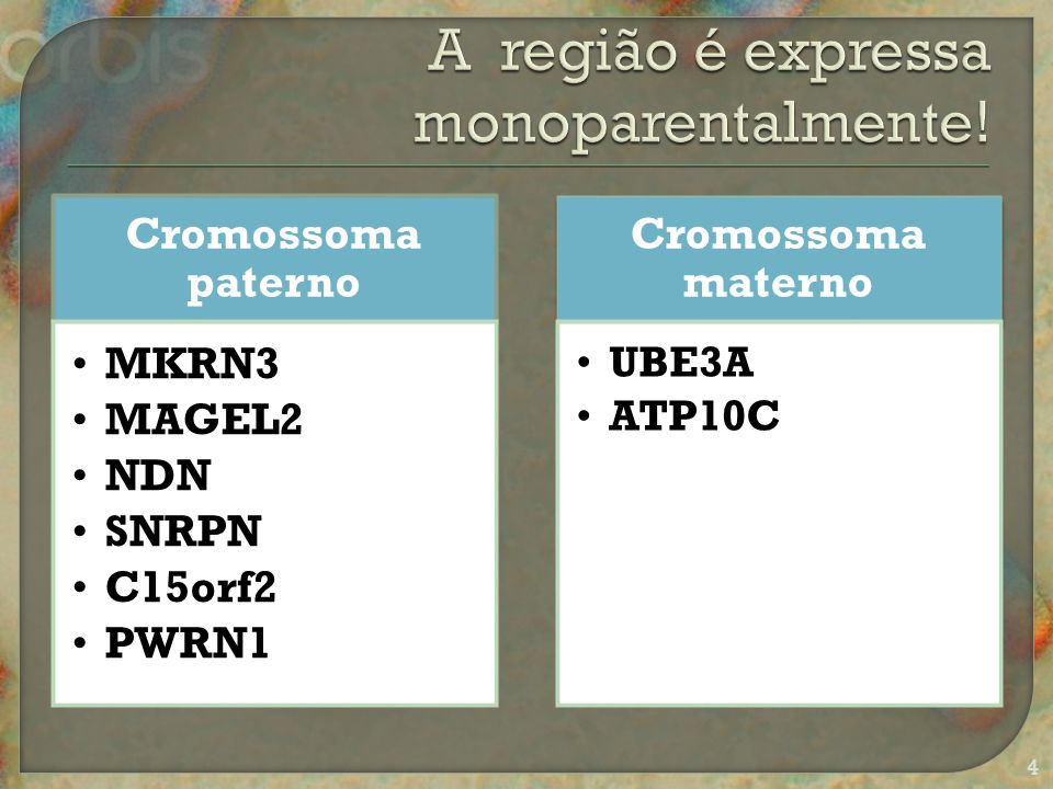 Cromossoma paterno MKRN3 MAGEL2 NDN SNRPN C15orf2 PWRN1 Cromossoma materno UBE3A ATP10C 4