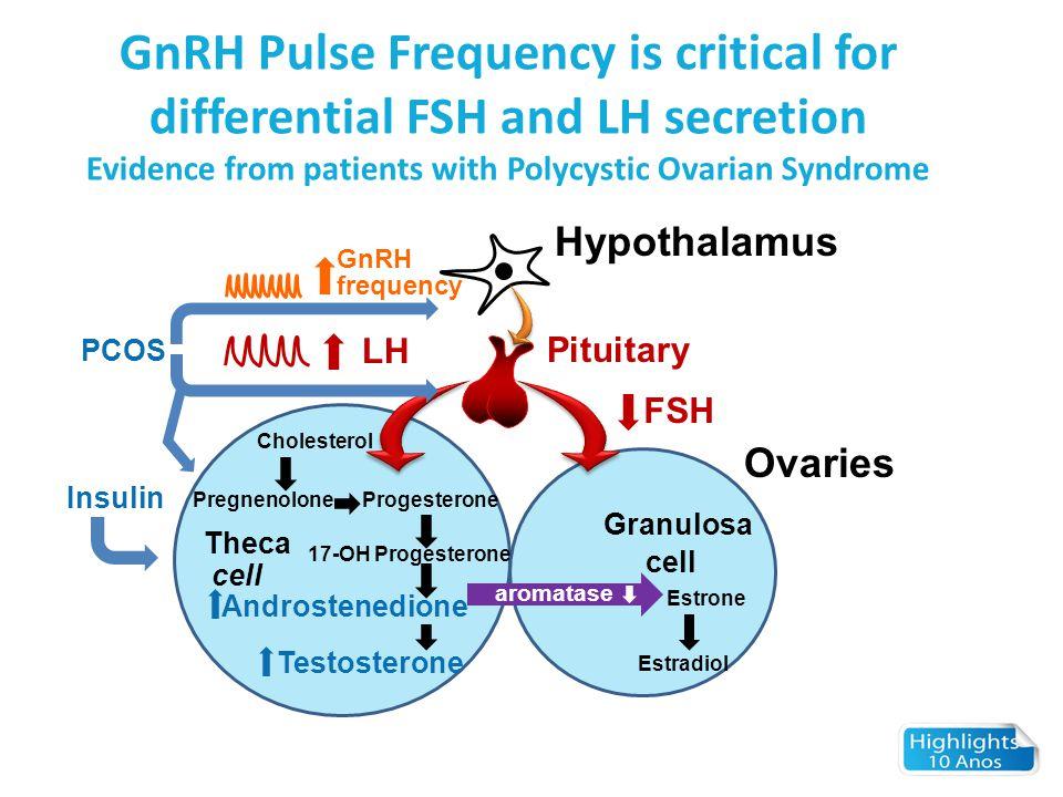 LH FSH Pituitary Ovaries Hypothalamus Cholesterol ProgesteronePregnenolone Theca cell Androstenedione Testosterone Estradiol Estrone cell Granulosa ar