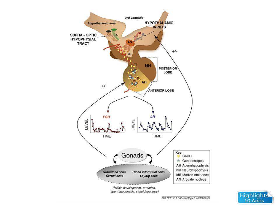 Visão geral do eixo reprodutor Múltiplos níveis de regulação – Hipotálamo – programas precisos de pulsatilidade de GnRH, inputs múltiplos e complexos – Hipófise – regulação diferencial da síntese e secreção de LH e FSH – Gônada – regulação sexo-específica da esteroidogênese e gametogênese Regulação autócrina, parácrina e endócrina (alças de feed back)