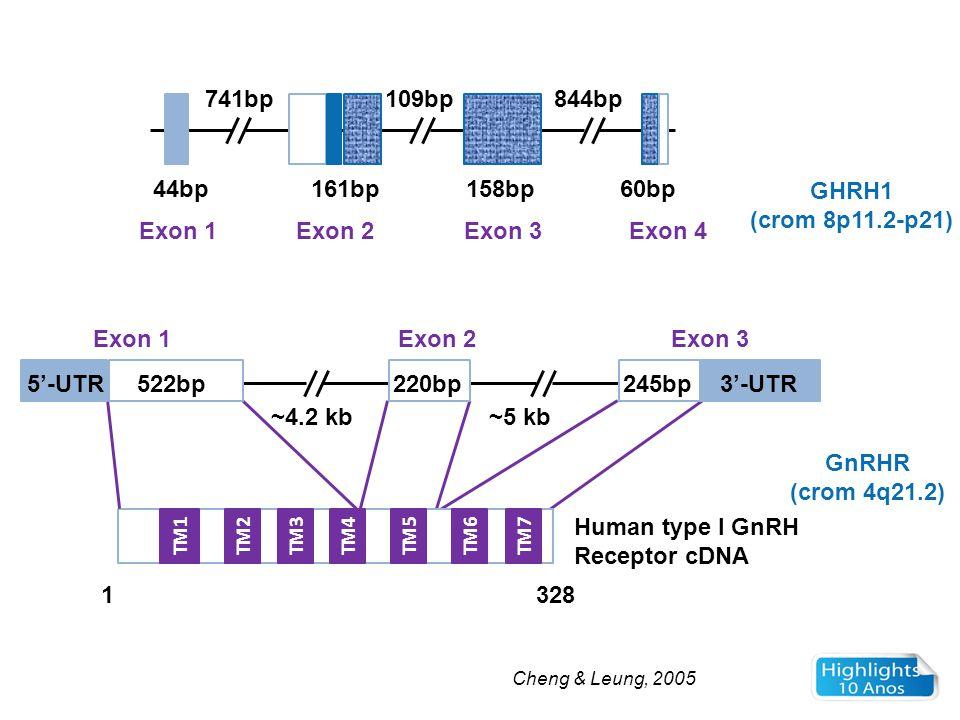 GHRH1 (crom 8p11.2-p21) GnRHR (crom 4q21.2) Cheng & Leung, 2005 TM1TM2TM3TM4TM5TM6TM7 44bp 741bp 161bp 109bp844bp 158bp60bp Exon 1Exon 2Exon 3Exon 4 E