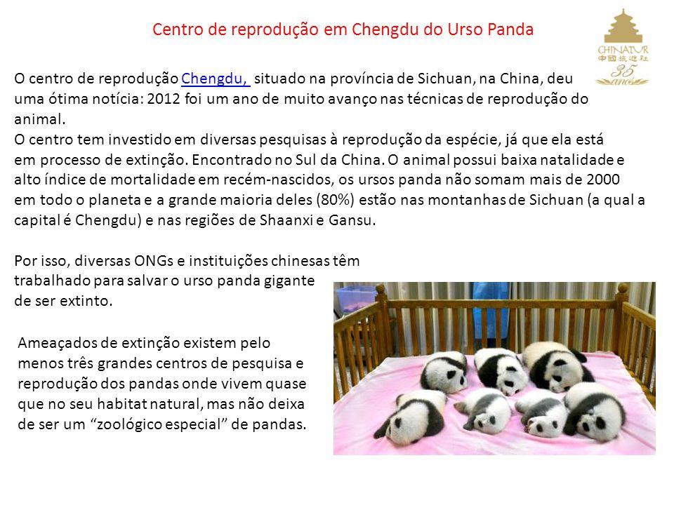 Centro de reprodução em Chengdu do Urso Panda O centro de reprodução Chengdu, situado na província de Sichuan, na China, deuChengdu, uma ótima notícia: 2012 foi um ano de muito avanço nas técnicas de reprodução do animal.