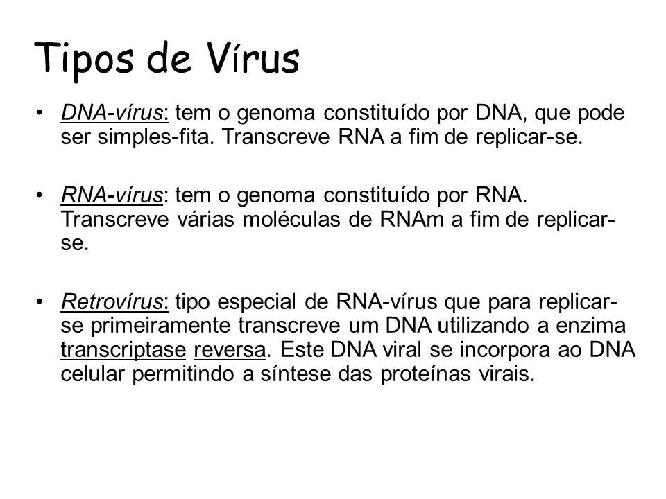 Tipos de V í rus DNA-vírus: tem o genoma constituído por DNA, que pode ser simples-fita. Transcreve RNA a fim de replicar-se. RNA-vírus: tem o genoma