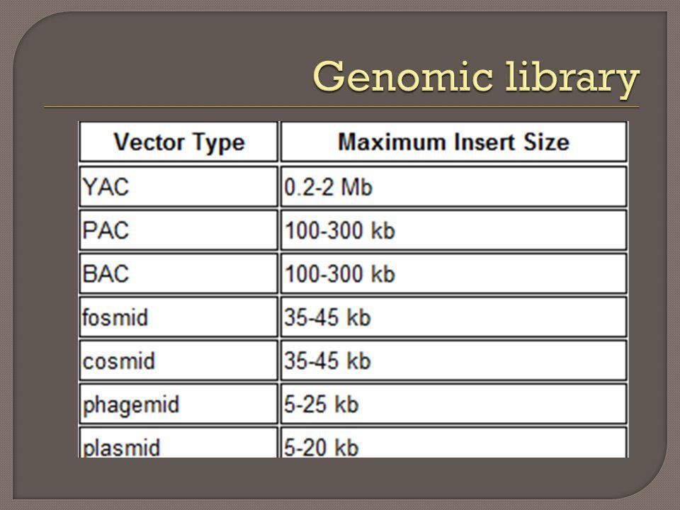  Genes que já sofreram recombinação no genoma de interesse: prontos a utilizar.